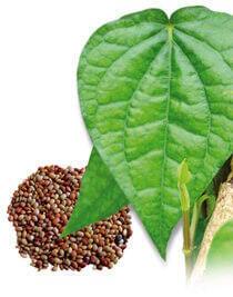 perdita di peso di caffè leptina malesia