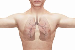 wat doen organen